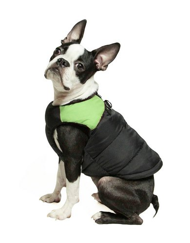 5. GOOBY PADDED COLD WEATHER VEST FOR SMALL DOGS