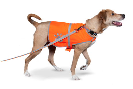 4. PETFLECT REFLECTIVE DOG VEST