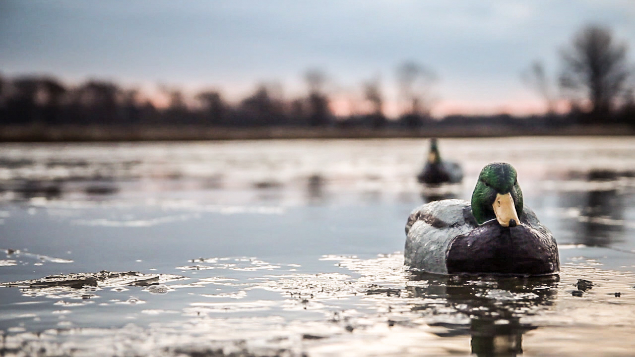 duck-hunting1