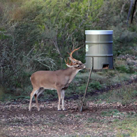 to corn deer on moving feeders past the homemade feeder