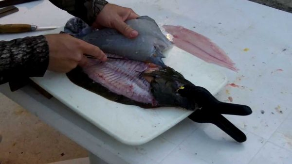 filleting fish with folding knife