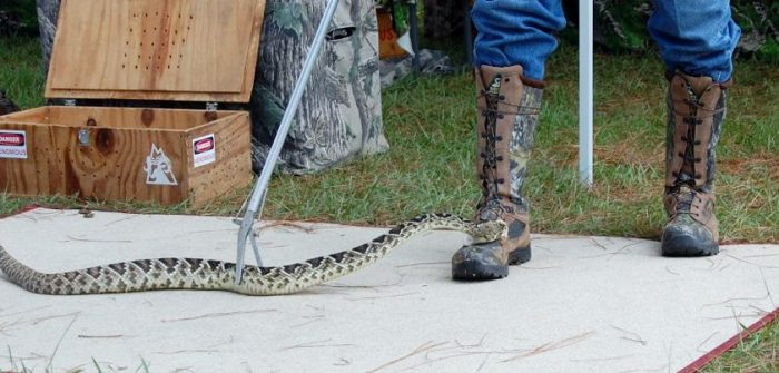 testing snake proof boots