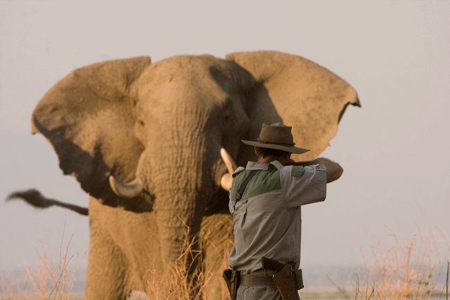 trophy hunting ethics