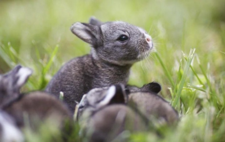 An in depth review on how to breed rabbits in 2018