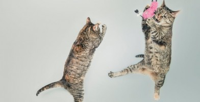 An in-depth review of the best cat toys on the market in 2018.