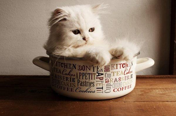 Kitty-in-a-Cup
