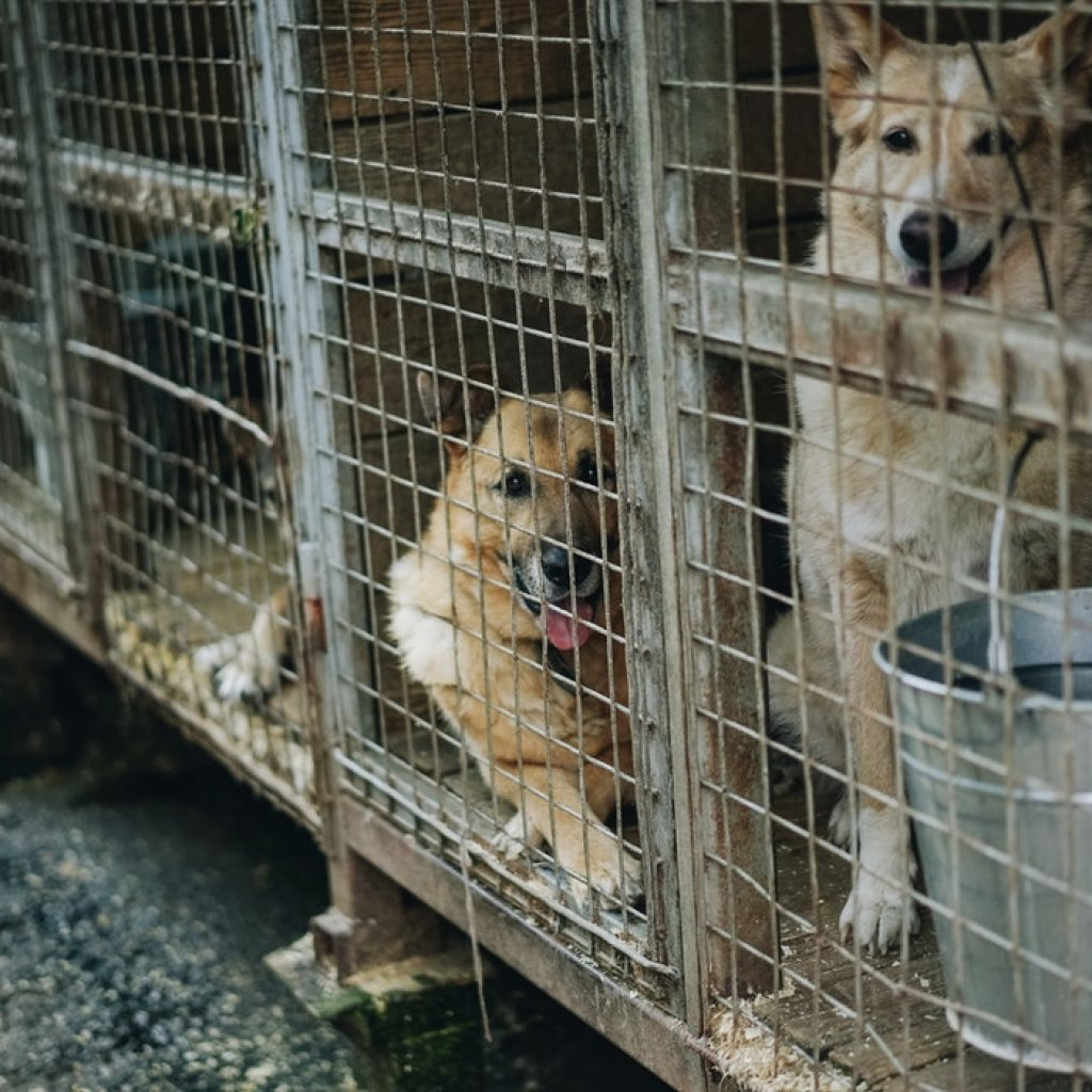 Dogs-in-Kennel