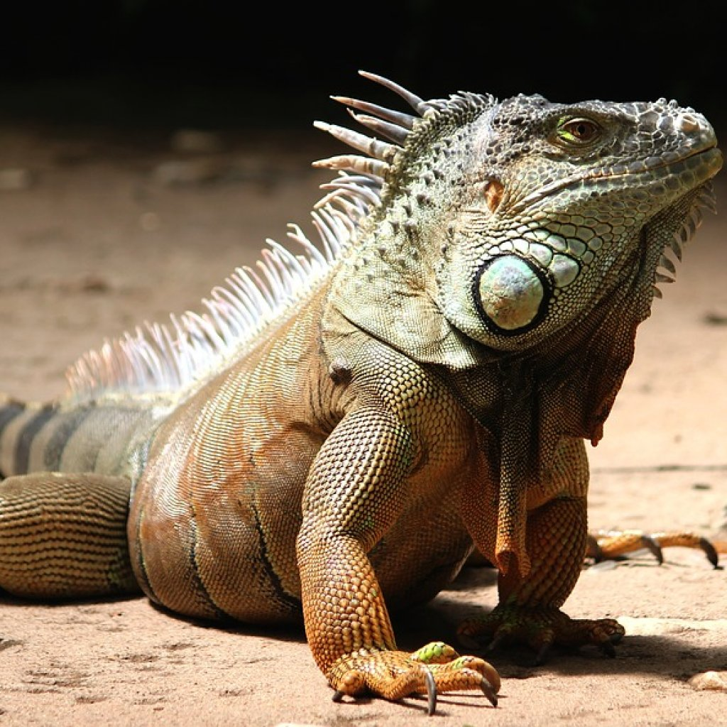 How to Set Up Your First Pet Iguana Habitat | TheGearHunt
