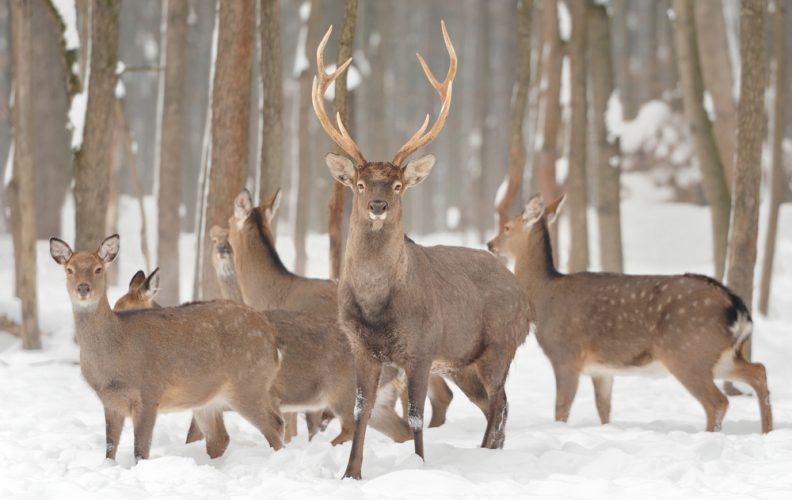 Hunting in Snow: Tips and Strategies for Adjusting to the Tough Elements!