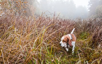 Can a Hunting Dog Be a Family Pet?