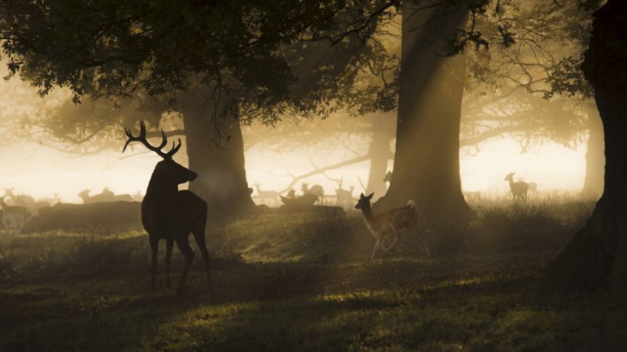 5 Deer Tracking Strategies for Successful Hunting