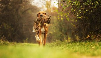 Best All Around Hunting Dogs: Our Top 5!