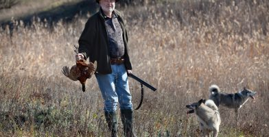 The Best Dog Training Collars for Bird Dogs