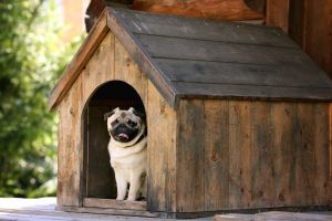 An in depth review of the best outdoor dog houses in 2017