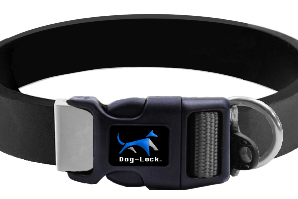 we rated the best gps dog collars