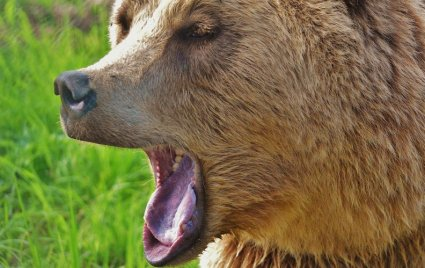 An in depth guide for bear safety while camping.