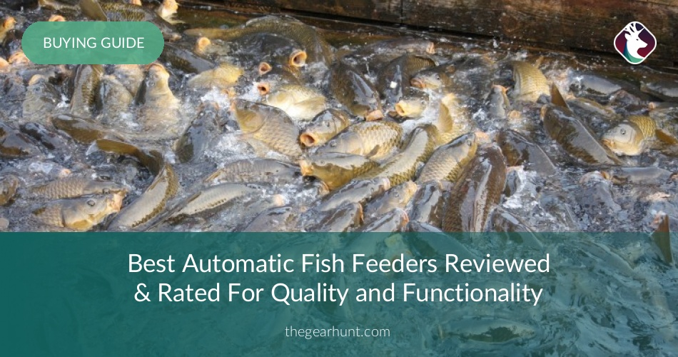 Best automatic fish feeders reviewed and put to test in for Best automatic fish feeder